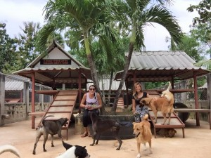 olunteering at Soi dog shelter in Phuket.  A remarkable organisation helping street dogs in Thailand
